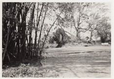 1958 Looking From Fairy Dell To Grotto