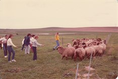 1981 Pelican Sheep Station